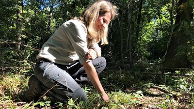 Juliane Klein, Forstrevierleiterin im Baden-Badener Rebland, zeigt einen Bestand mit Jungbäumen.