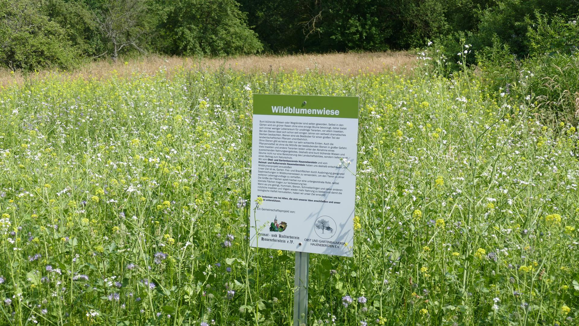 Die Wildblumenwiesen um Haueneberstein begeistern Spaziergänger und Radfahrer.