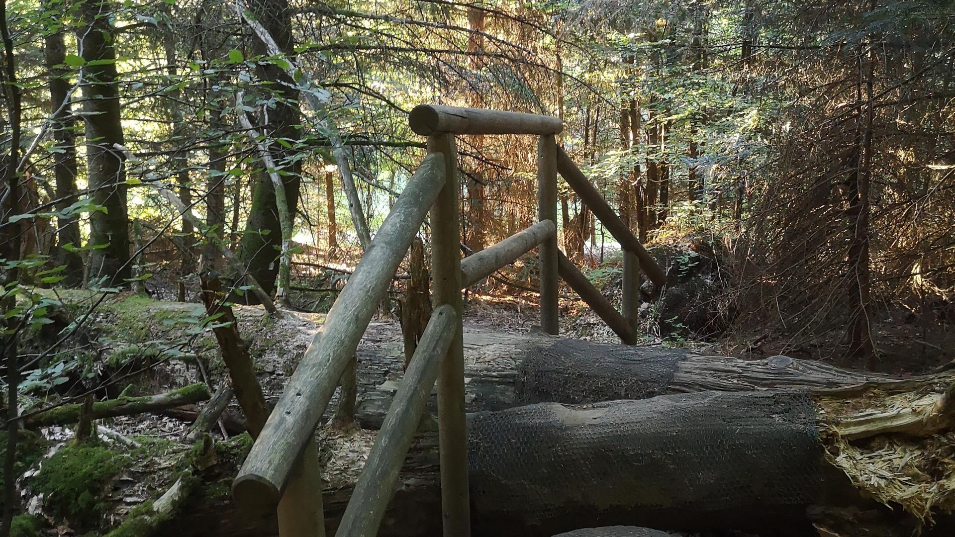 Holzstege führen im Wildnispfad teilweise über umgestürzte Bäume