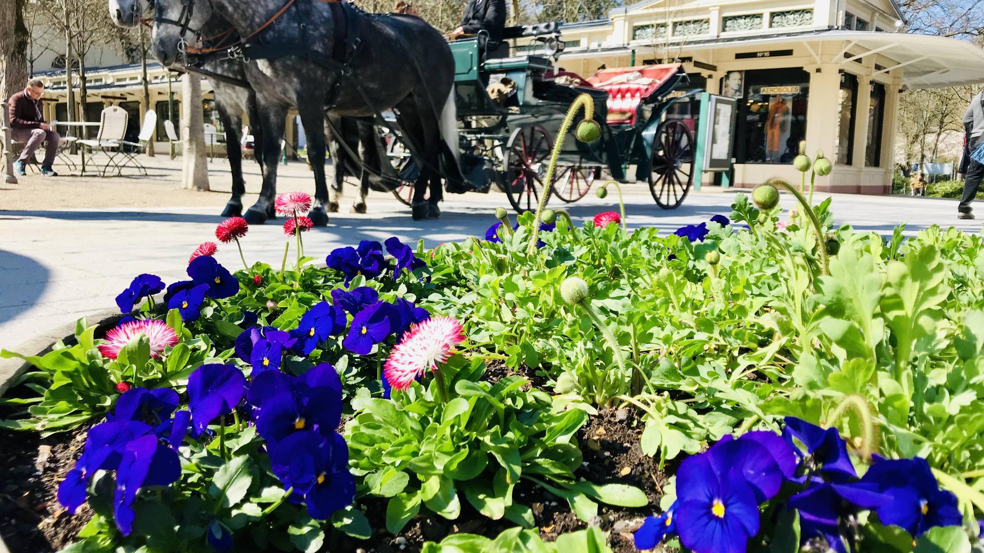Noch ein gewohntes Bild: Die Pferdekutsche wartet vor den Kurhaus-Kolonnaden in Baden-Baden auf die nächsten Gäste. Doch dem Betrieb droht wegen der Corona-Krise das Aus.