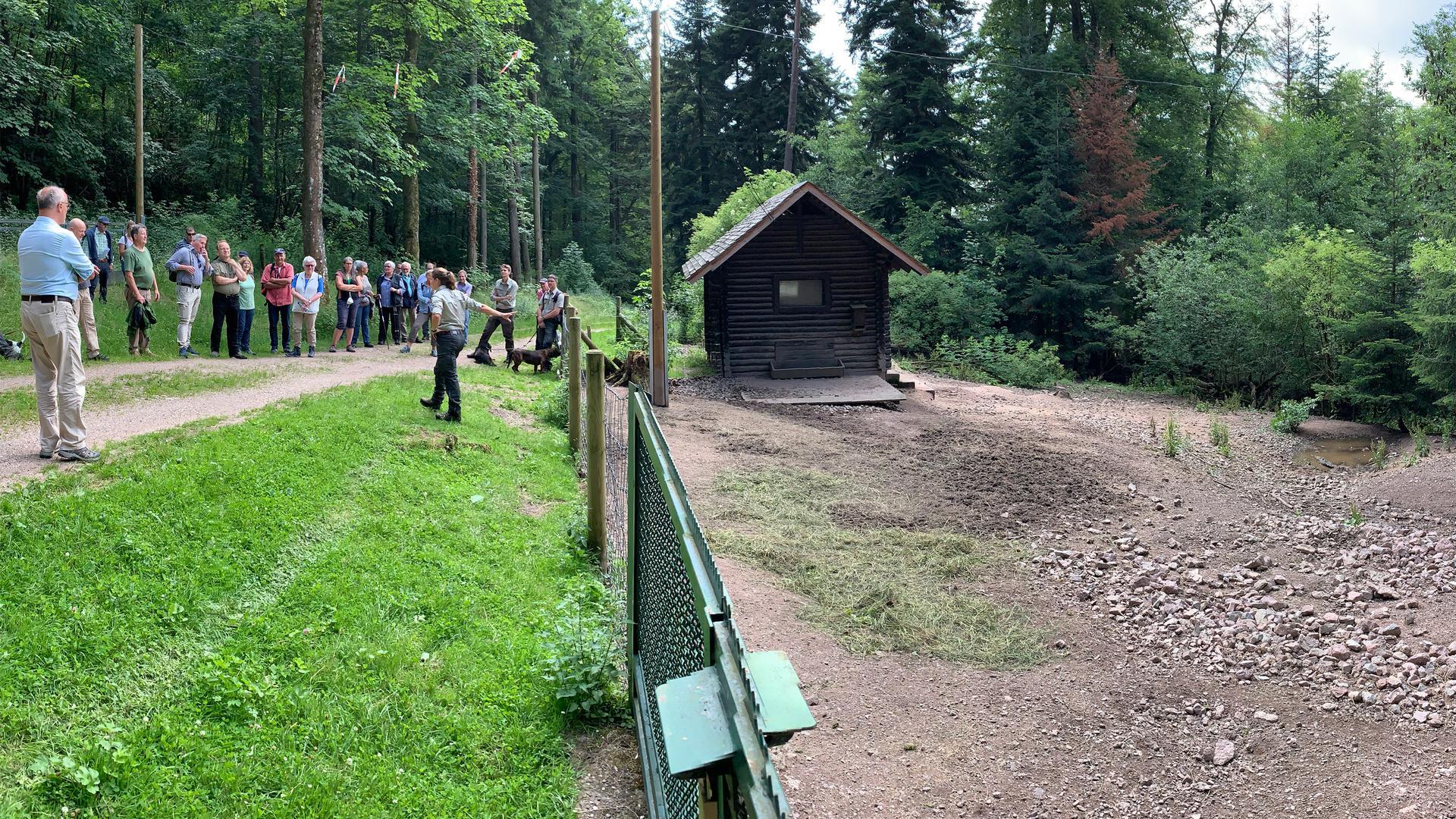 Deutliche Spuren zeigt das Wildschweingehege im Merkurwald. Auf der anderen Seite des Weges soll jetzt ein Ausweichquartier reaktiviert werden, damit sich der Waldboden erholen kann.