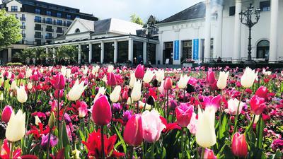 Vor dem Kurhaus Baden-Baden blühen noch immer Tulpen.