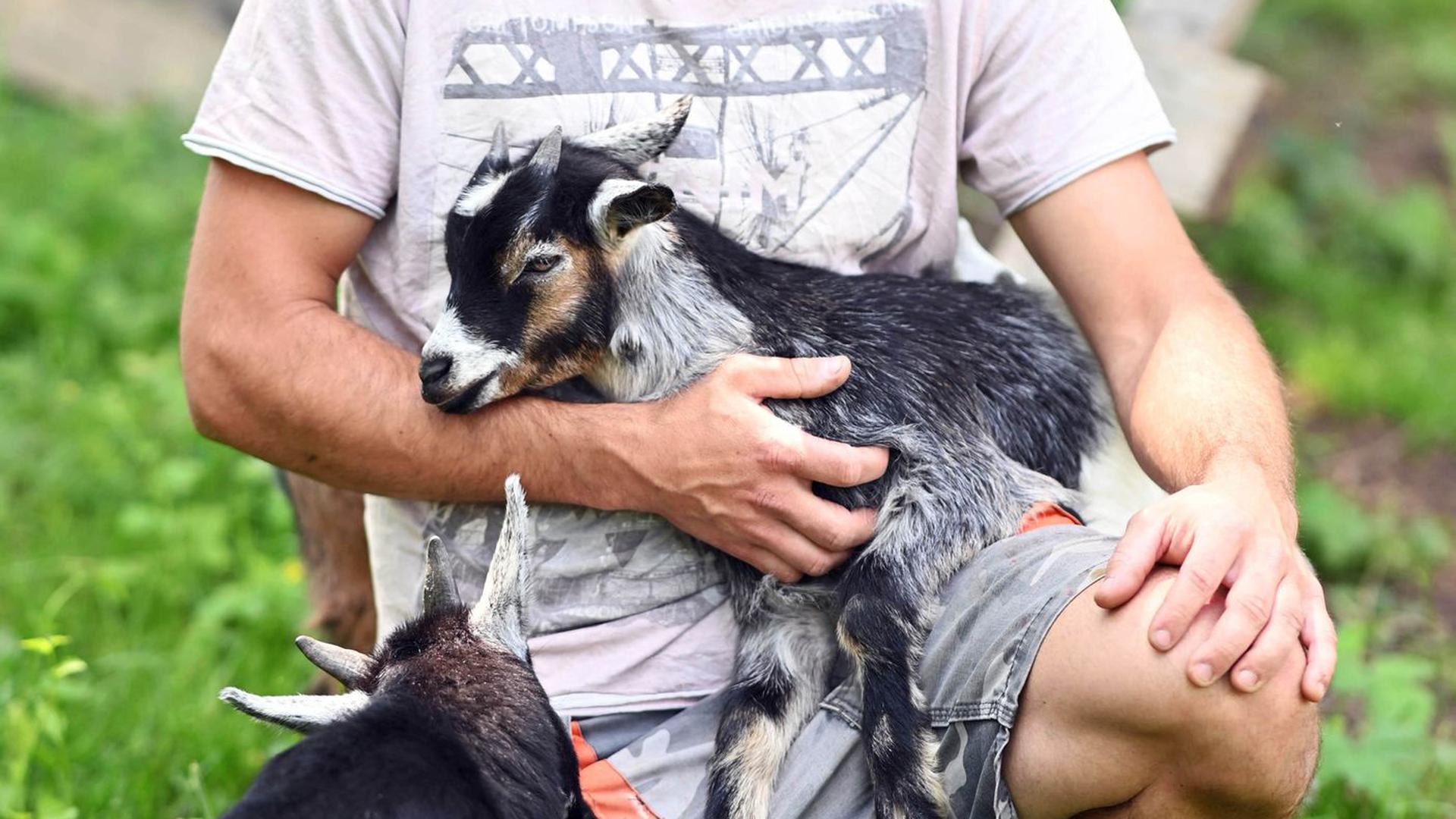 Sebastian Fritz hält im Baden-Badener Ortsteil Varnhalt eine Zwergziege in seinem Arm.
