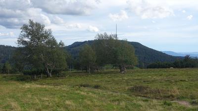 Blick von Hochkopf - Schwarzwald - Auf Hornisgrinde