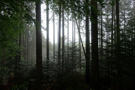 Blick in den Wald - Stämme gegen Sonne