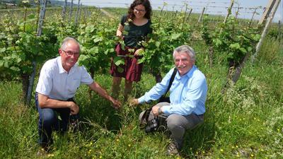 Blüten im Betschgraben: Winzer Berthold Falk (links) freut sich mit Imker Manfred Kraft und Lilli Wahli vom Naturpark Schwarzwald über die Artenvielfalt im Weinberg.