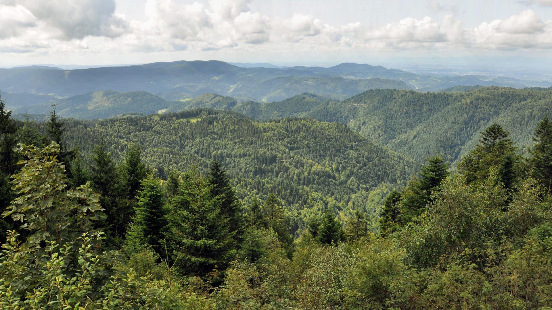 460 Quadratkilometer kommen neu zum Naturpark Schwarzwald Mitte/Nord hinzu.