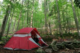 Zelten im Naturpark: Das Camp Grimbach liegt inmitten eines 80 Jahre alten Buchenwalds. E