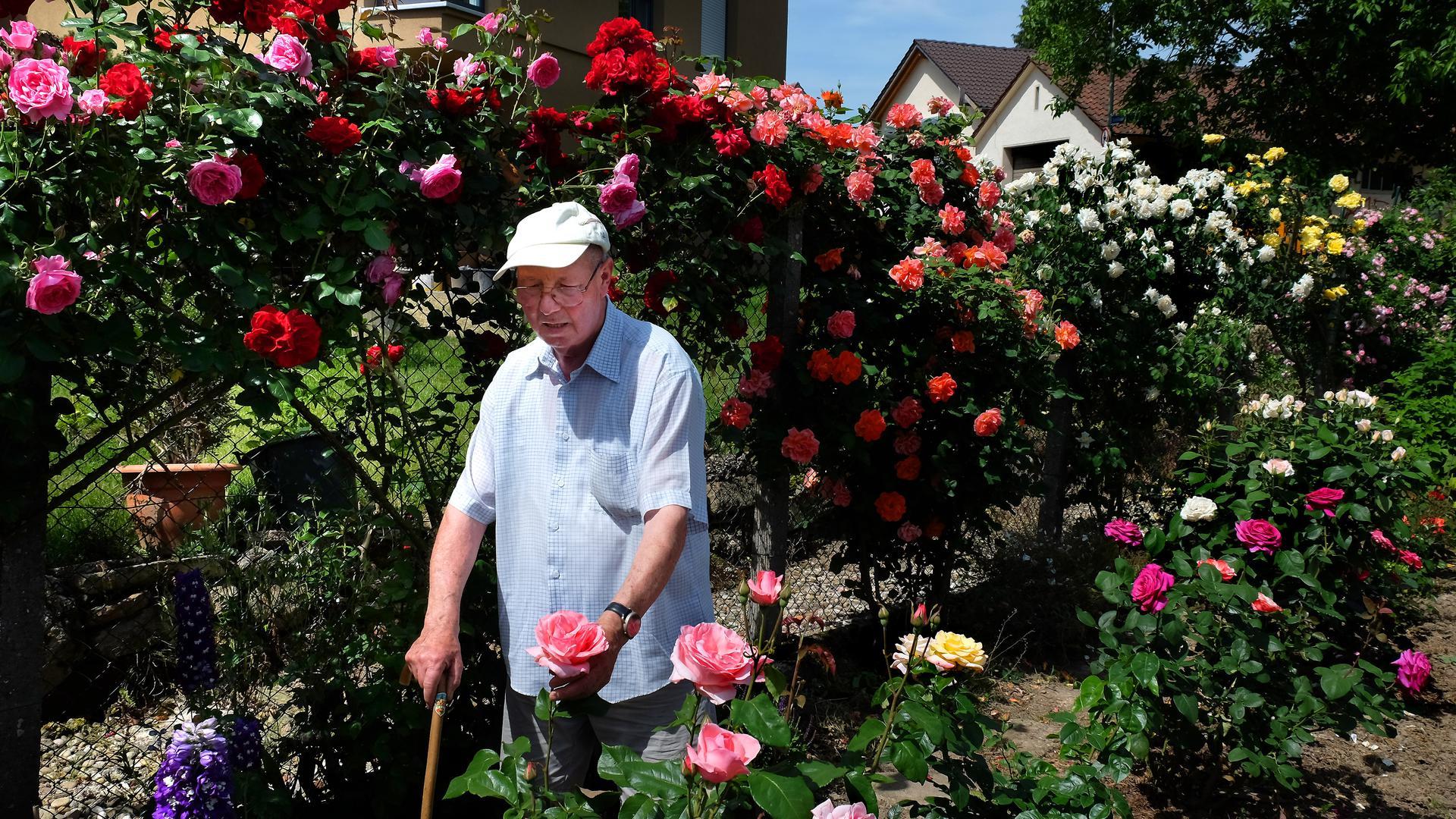 Pirmin Rapp in seinem Rosen-Garten