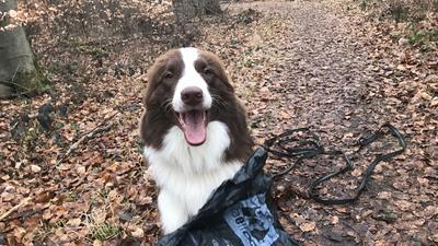 Hund und Hundekotbeutel