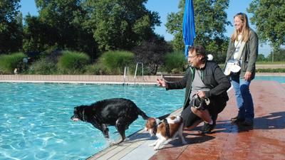 Menschen, Hunde, Freibad