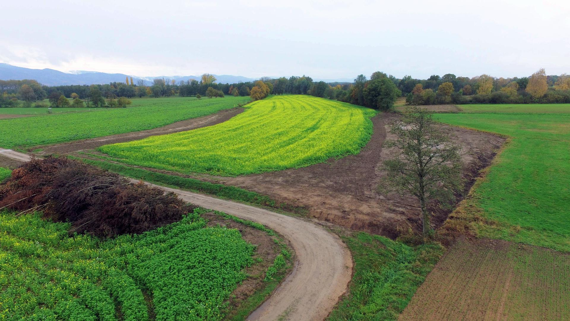 Hilfe für Bodenbrüter: Im Gewann Prinzipalwiesen/Warmersbrucher Hof wurden Gehölz entfernt und Mulden angelegt. Davon sollen Kiebitz und Großer Brachvogel profitieren.