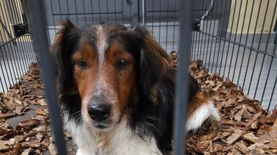 Wieder in Sicherheit: Nach seiner Flucht auf dem Baden Airpark wurde dieser Hund in einer Lebendfalle eingefangen.