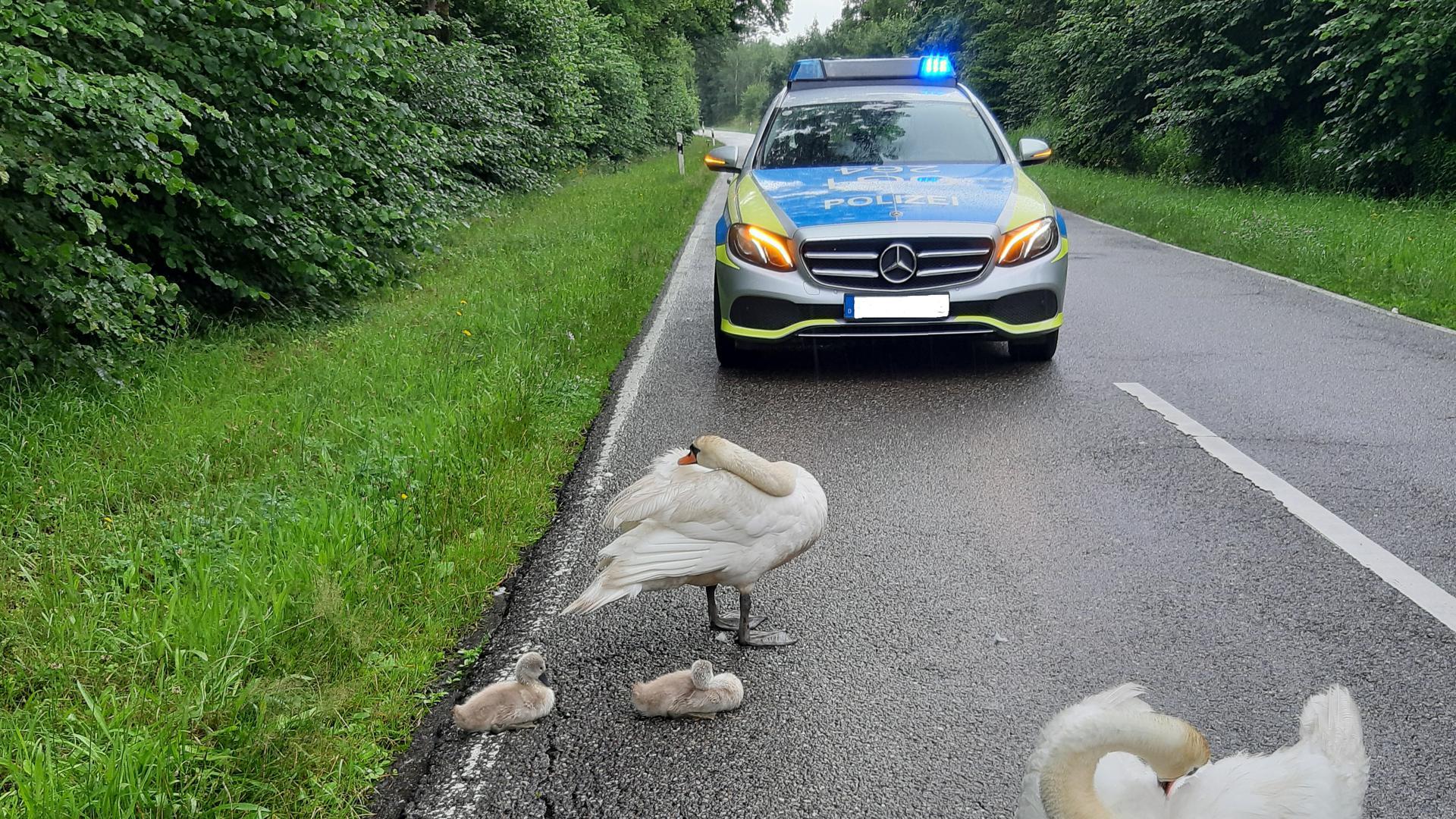 Mit einer Schwanenfamilie bekamen es Polizisten in Rheinmünster zu tun.