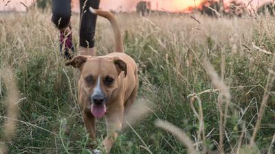 Freilaufender Hund auf einer Wiese