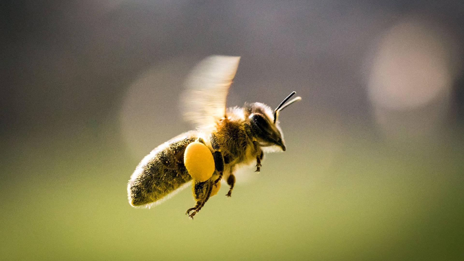 Starker Rückgang: Insekten finden in Steingärten keinerlei Nahrung.