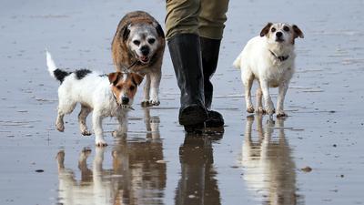 Ein Mann geht mit seinen Hunden am Camber Sands Strand Gassi. +++ dpa-Bildfunk +++