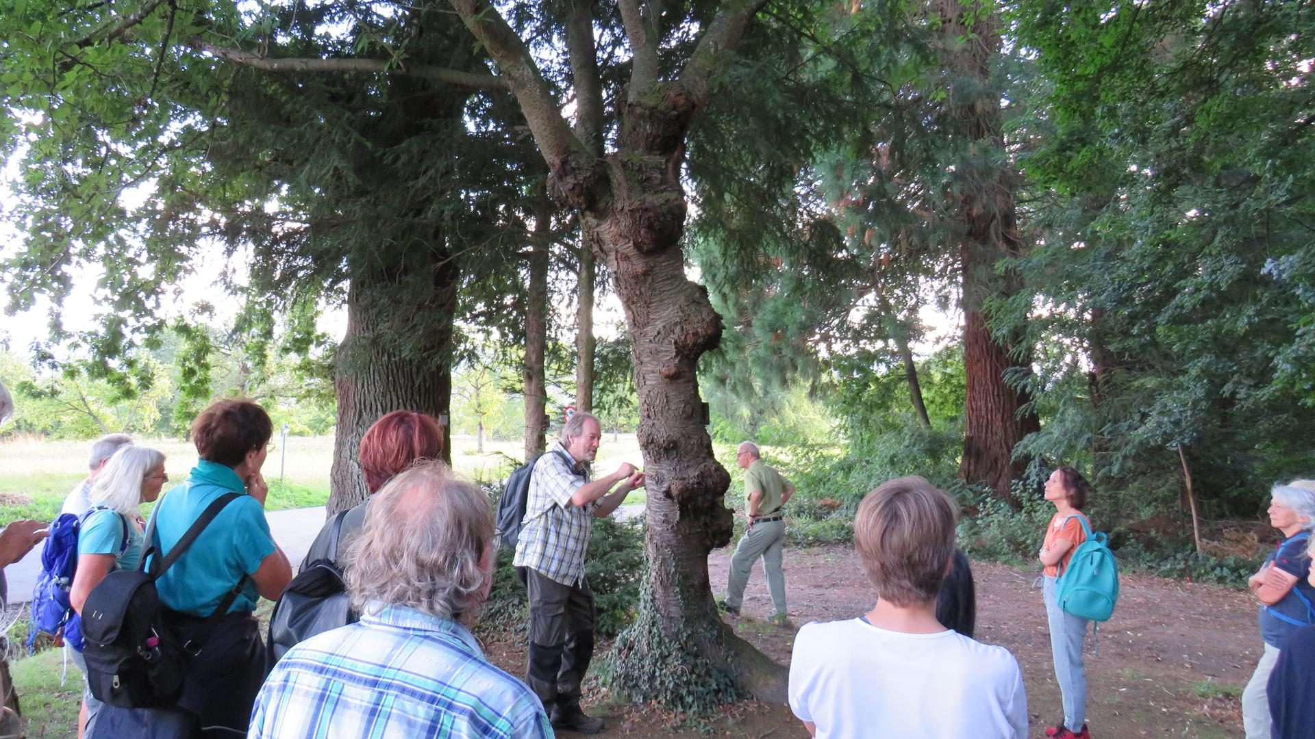 Baumexoten wie diese orientalische Kirsche zeigte Rainer Schulz