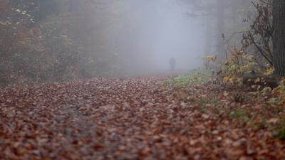 11.11.2020, Baden-Württemberg, Stuttgart: Ein Spaziergänger geht im Nebel auf einem Waldweg auf dem zahlreiche herbstliche gefärbte Blätter liegen spazieren. Foto: Bernd Weissbrod/dpa +++ dpa-Bildfunk +++ | Verwendung weltweit
