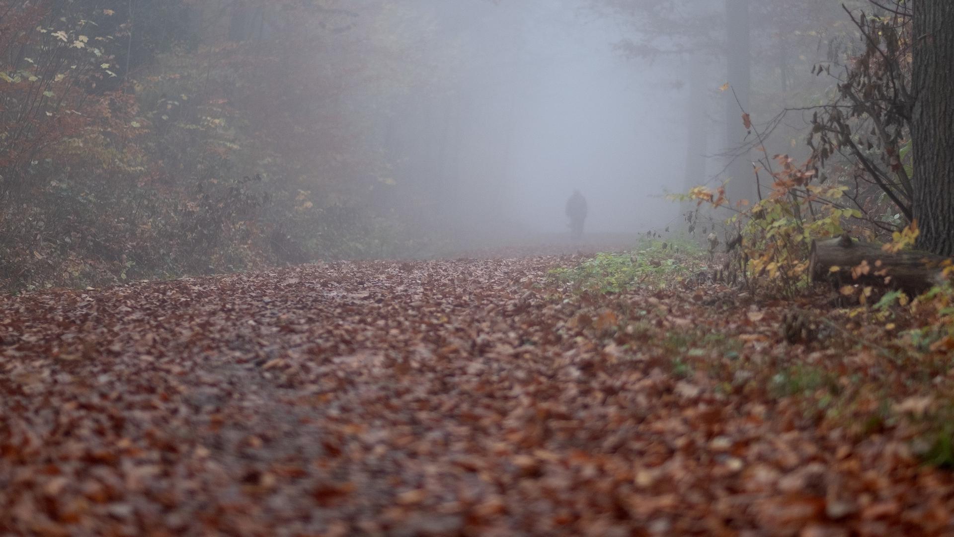 11.11.2020, Baden-Württemberg, Stuttgart: Ein Spaziergänger geht im Nebel auf einem Waldweg auf dem zahlreiche herbstliche gefärbte Blätter liegen spazieren. Foto: Bernd Weissbrod/dpa +++ dpa-Bildfunk +++   Verwendung weltweit