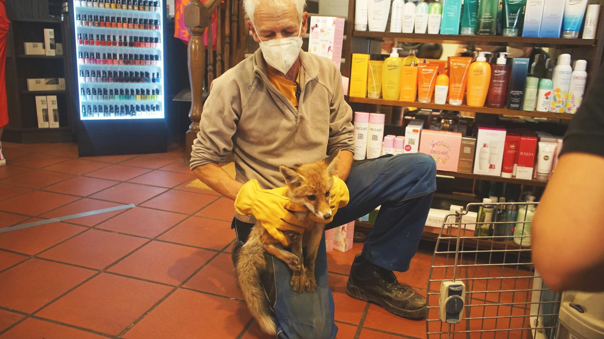 Ein Mann hat einen Fuchs auf dem Oberschenkel sitzen.