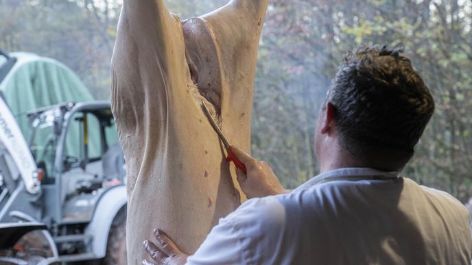 Hausschlachtung Schwein Michelbach