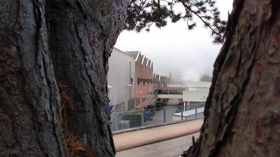 Blick durch Bäume auf Produktionshallen des Benz-Werks Gaggenau