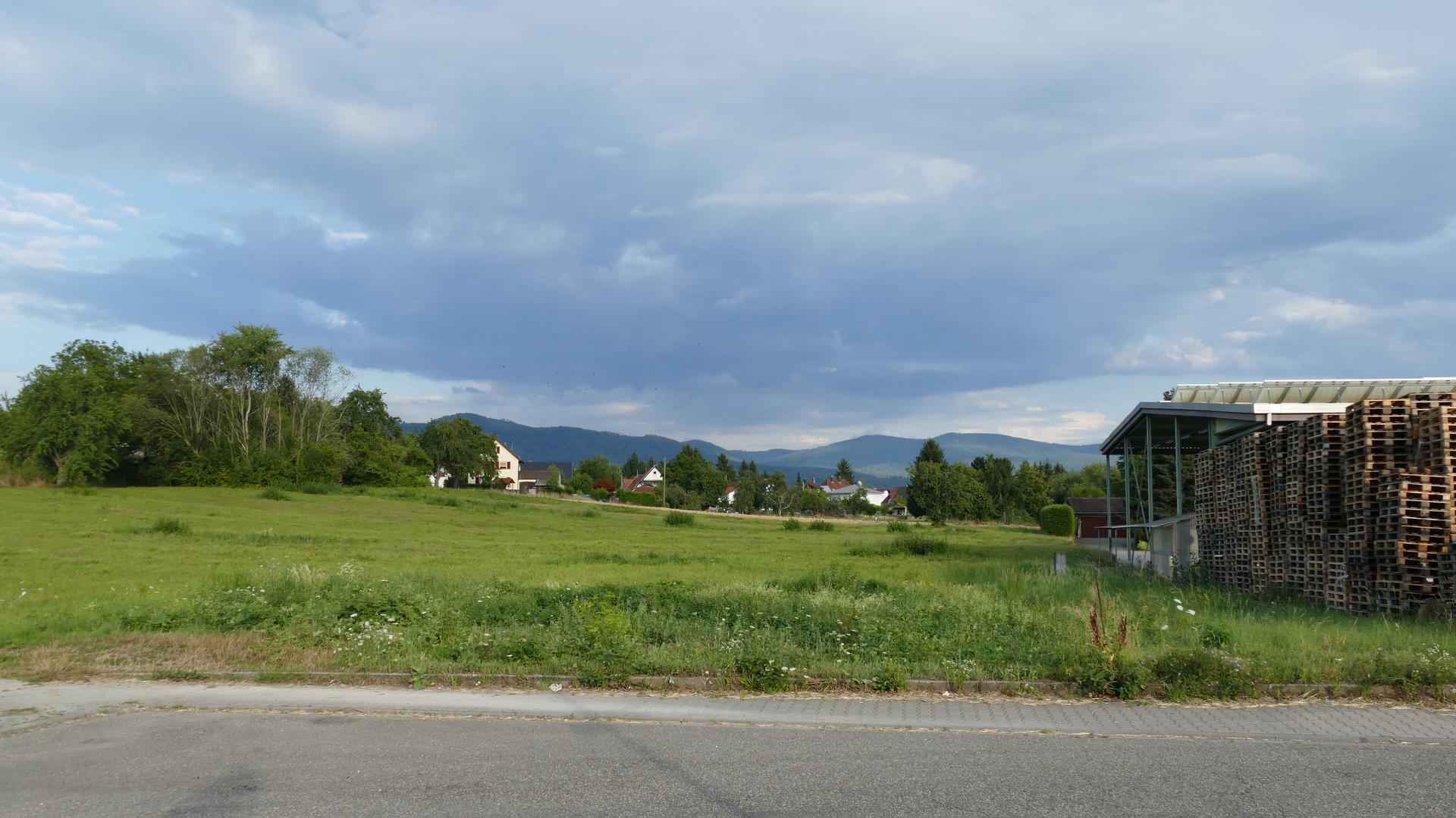 Wiesengelände in der Draisstraße in Bad Rotenfels in der neues DHL-Depot entstehen soll