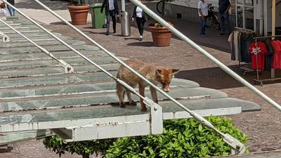 Ein Fuchs läuft über ein Vordach.