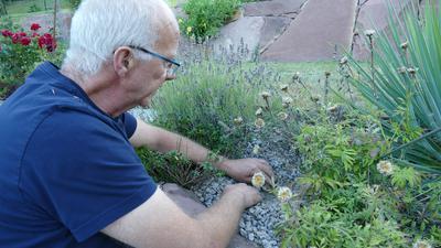 Mann kniet im Garten