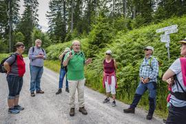 Eine Wandergruppe im Wald.