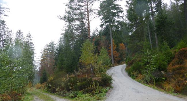 Ein Waldstück mit einer Weggabelung