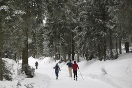 Ein Langlauf-Paradies: Im Schwarzwald gibt es viele Ski-Strecken für Wintersportler. Im Bild ist die Loipe auf dem Metaweg am Ruhestein zu sehen.