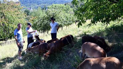 Dominik und Sara Sämann (von rechts) sind Pferdehalter und züchten Lipizzaner, hier auf der Schafweide bei Gernsbach mit Frederic Gaus (links)