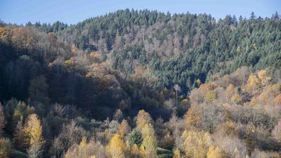 Wald Weisenbach