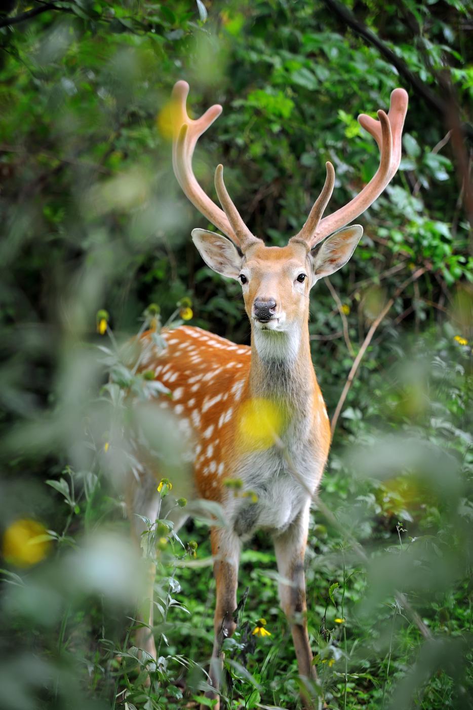 Ein Hirsch steht im Wald.