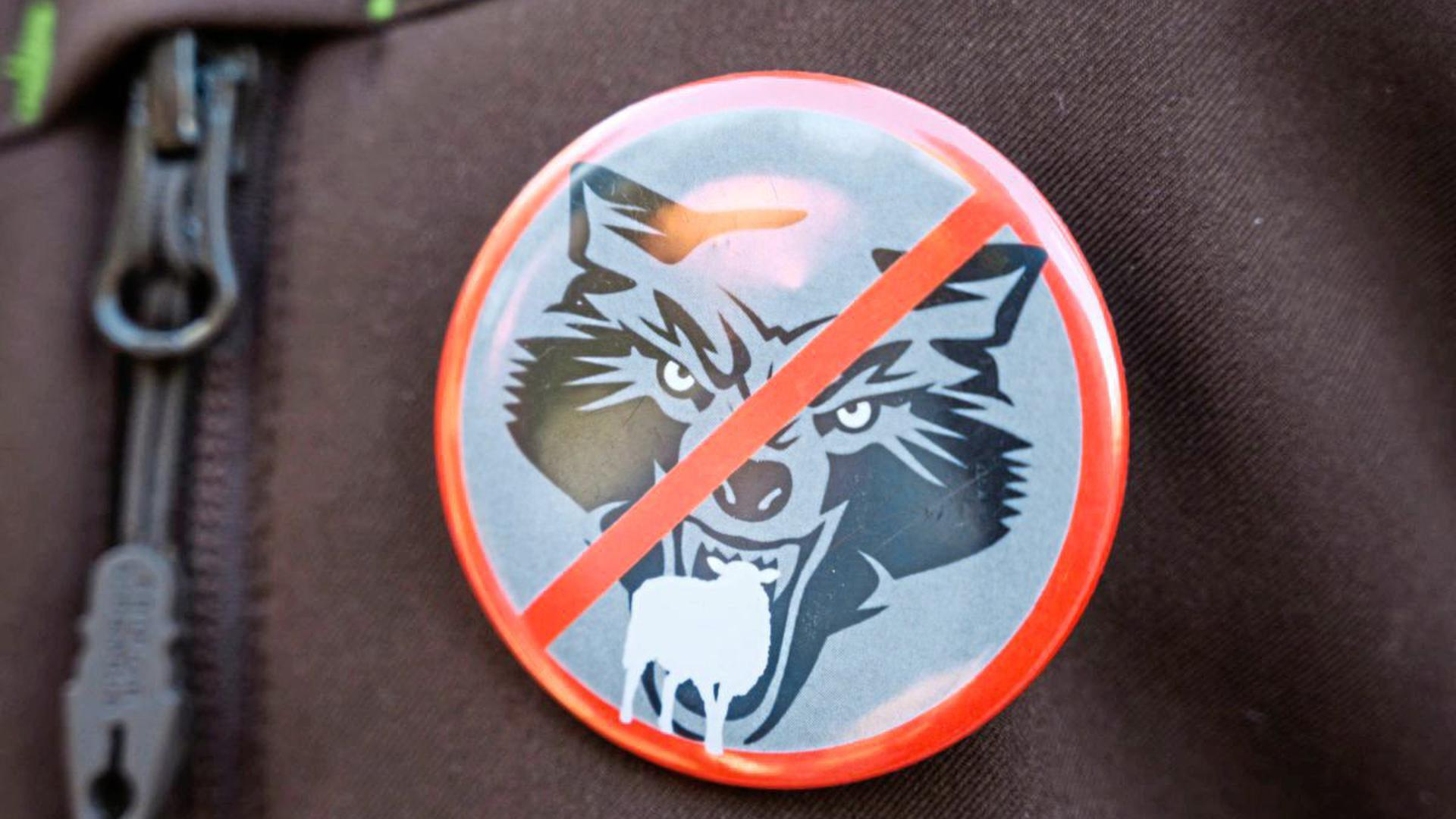 """Gefahr oder nicht? Die Rückkehr des Wolfes sorgt deutschlandweit für heftige Debatten. Das baden-württembergische Umweltministerium hat allerdings bereits klargestellt, dass der im Nordschwarzwald ansässige """"GW852m"""" kein """"Problemwolf"""" ist. Foto: dpa"""