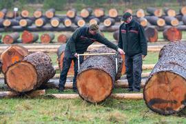 Stamm eines Baumes auf einem Wertholzlagerplatz.