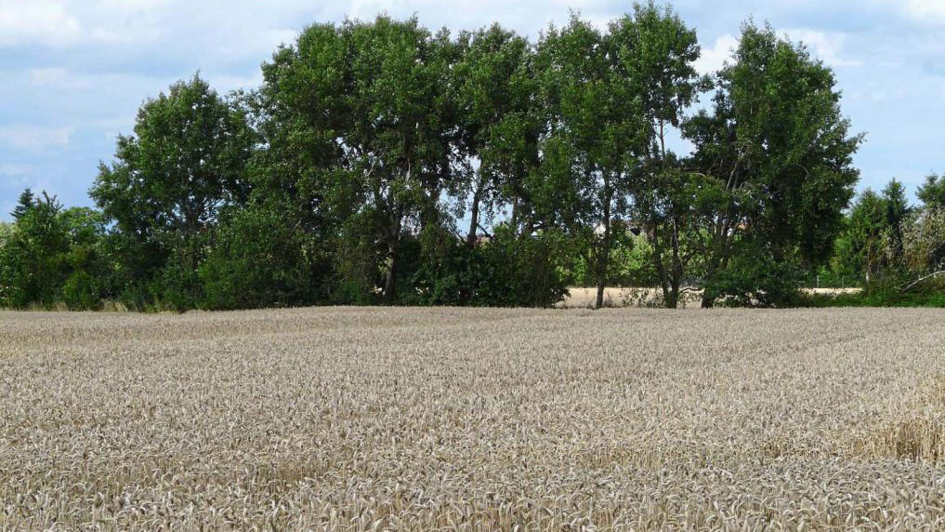 Idylle oder PFC: Untersuchungen von Pflanzen, Grundwasser und Böden sollen auch in der Ortenau Klarheit bringen, ob Flächen mit Chemikalien aus Papierschlämmen belastet sind. (Symbolbild)