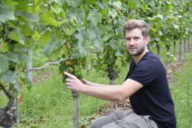 Weinbauberater Johannes Werner vor einem Rebstock, der, frostbedingt, nur wenige Trauben hat, links die leere Rute.