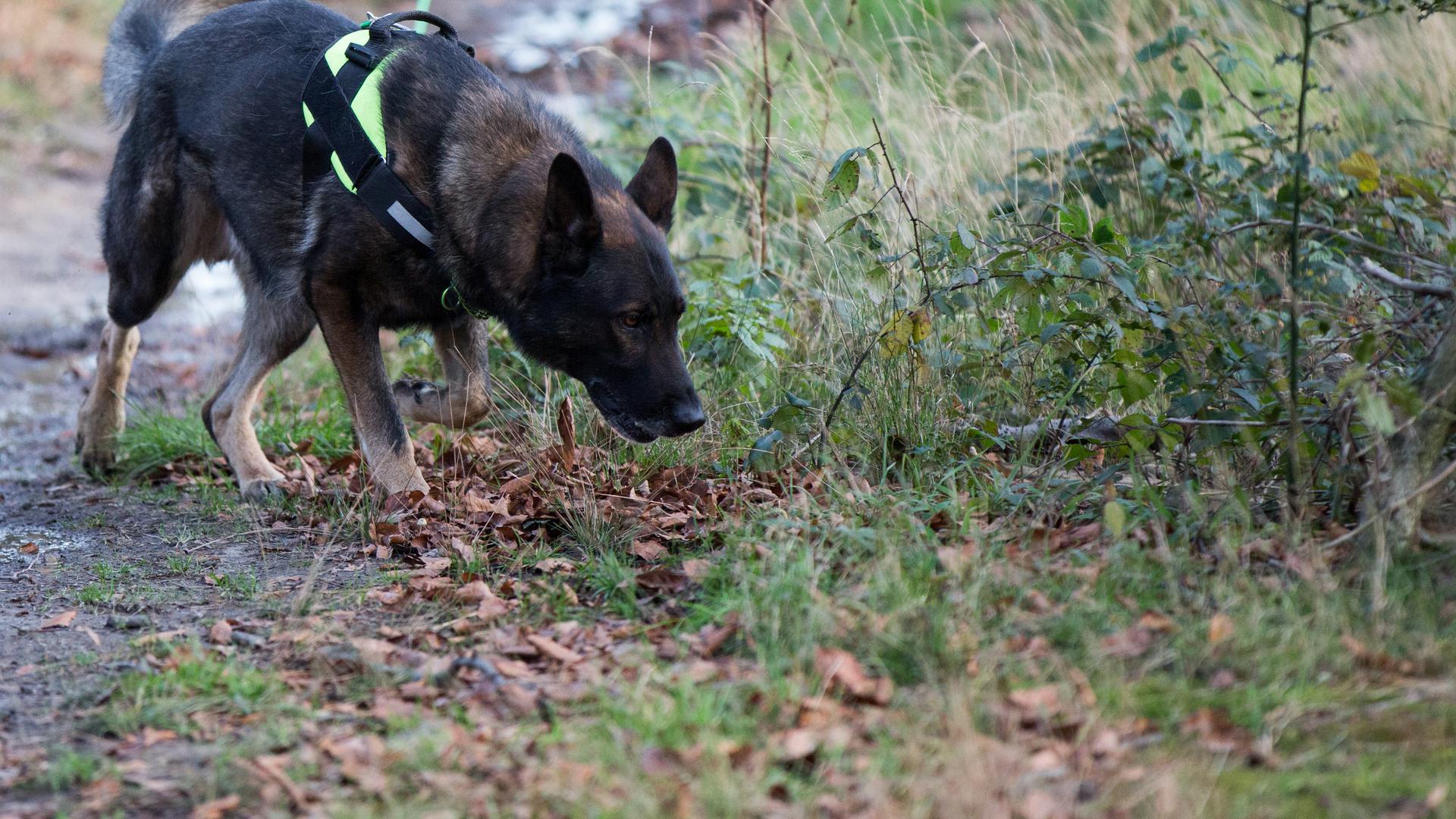 Ein Hund schnüffelt im Gras