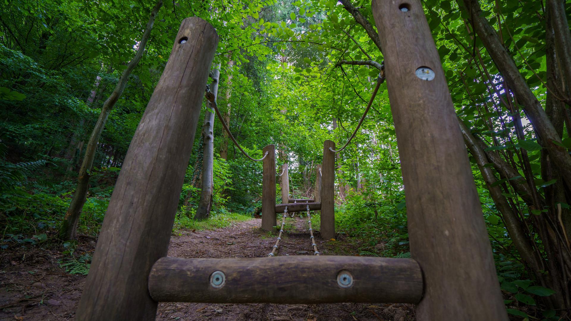 Sportgerät im Wald