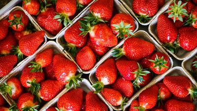 Nicht zu heiß und nicht zu nass: Dann dürften die Erdbeeren konstant reifen und besonders gut schmecken, sagen die Landwirte.