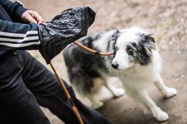 Franz Jung, Chef der Bürgerliste Witzhelden, hält am 01.06.2015 in Leichlingen (Nordrhein-Westfalen) vor seinem Hund Pookie eine Tüte für Hundekot. Foto: Maja Hitij/dpa (zu lnw-KORRvom 28.06.2015) ++ +++ dpa-Bildfunk +++