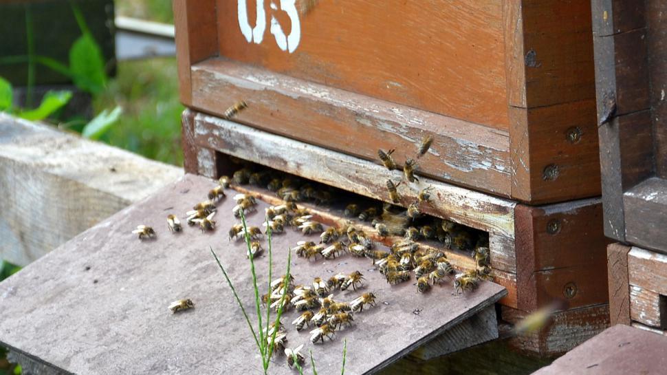 Bienen vor dem Einflugsloch ihres Stocks