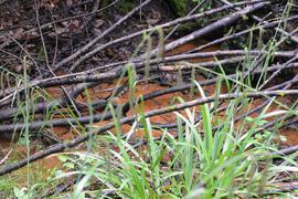 Spuren unserer Vorfahren: Wahrscheinlich durch Metalloxid rostrot gefärbtes Wasser läuft aus einem Hang am Illenbach. Gefährlich soll das nicht sein.