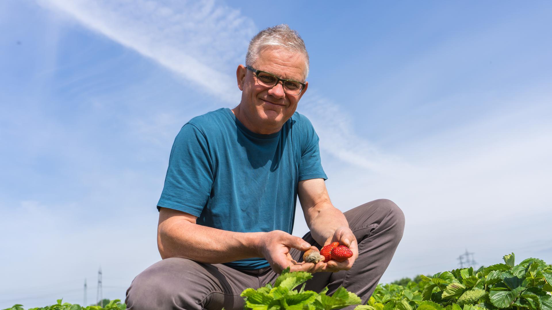 Erdbeerernte: Frank Späth vom Wagshurster Biohof Späth auf seinem Feld