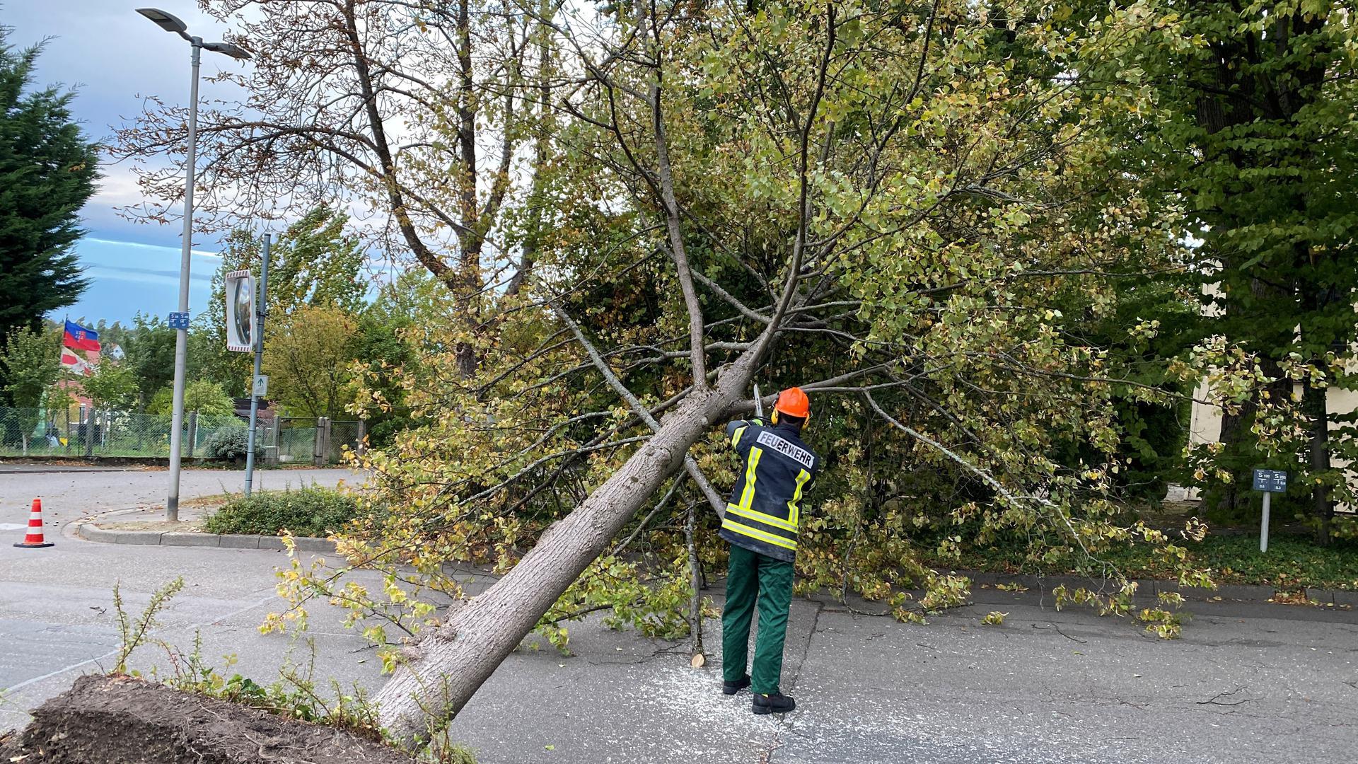 Ein umgestürzter Baum blockierte in der Antoniusstraße in Oberachern die ganze Fahrbahn