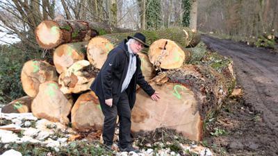 Ein Mann vor einem gefällten Baum