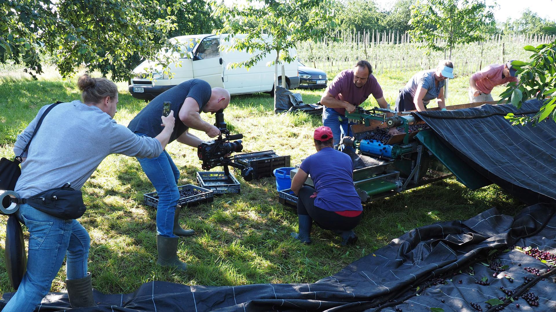 """Das ZDF-Kamerateam filmte beim Sortieren der """"Piemont-Kirsche"""" im vergangenen Juni in Mösbach"""